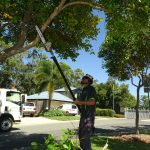 Tree pruning Arborist Tree Work Gold Coast