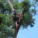Habitat Creation Arborist