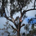 Tree Removal Gold Coast Arborist